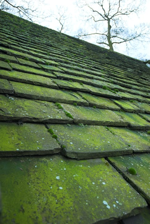 Mossy Roofing Shingles